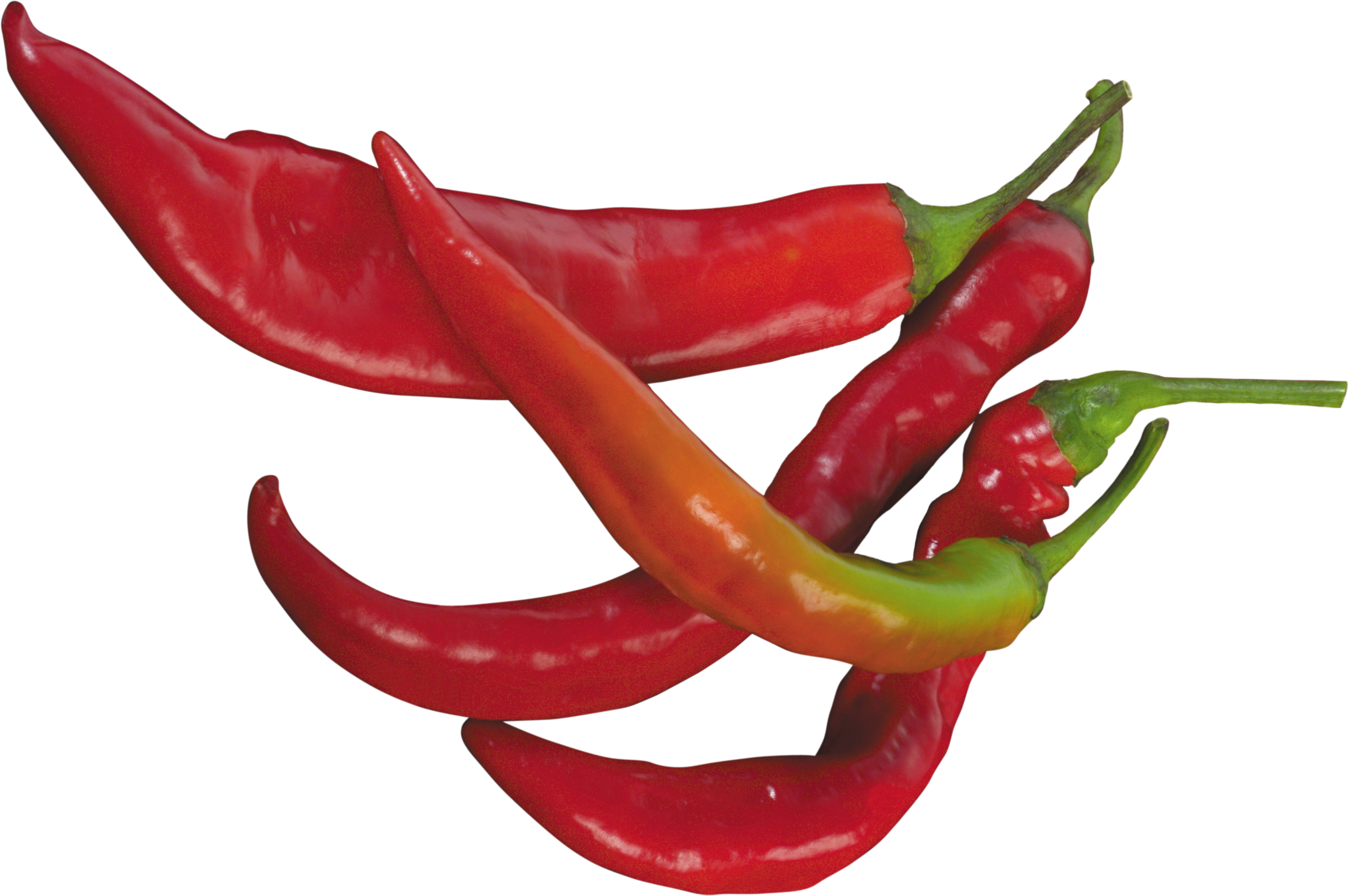 Peppers clipart chili pepper. Hot two isolated stock