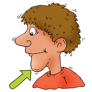 chin clipart