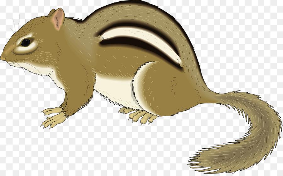 Chipmunk clipart brown. Squirrel rodent clip art