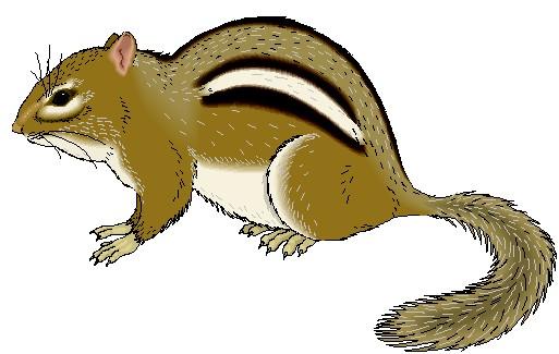 . Chipmunk clipart brown