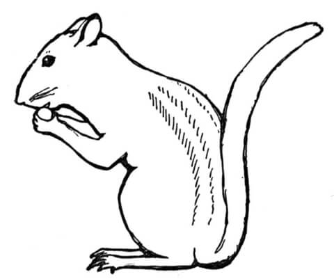 Chipmunk clipart coloring page. Eat nut free printable