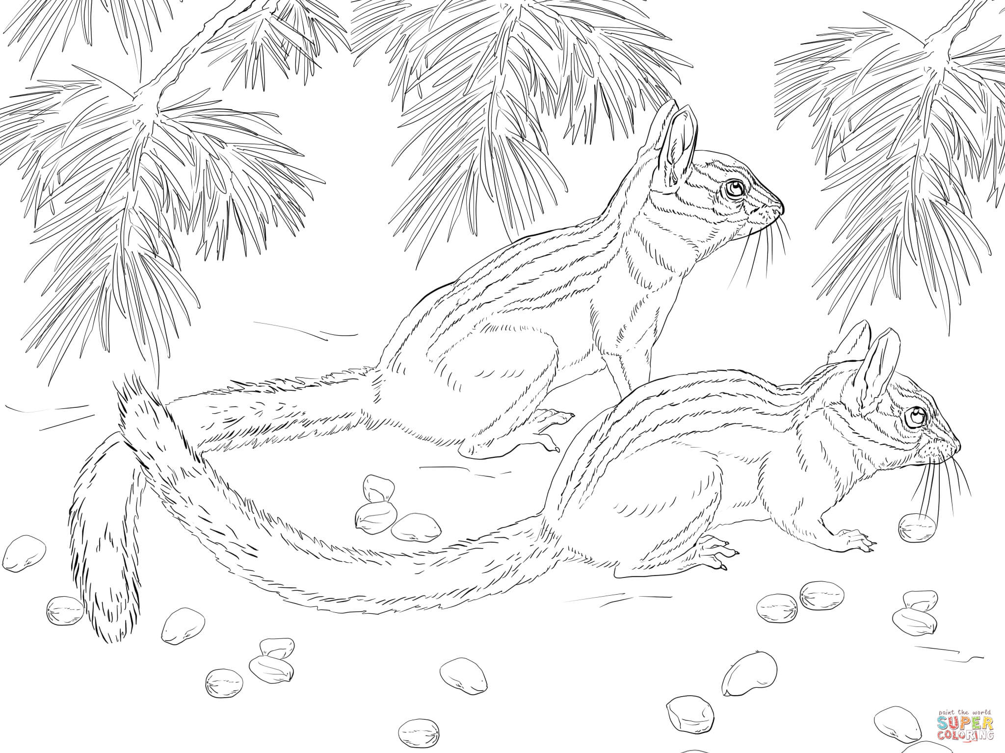 Long eared free printable. Chipmunk clipart coloring page