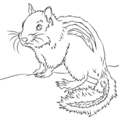 Chipmunk clipart coloring page. Chipmunks pages free from
