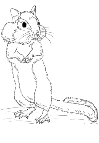 Chipmunk clipart coloring page. Free printable pages