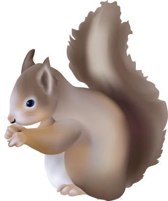 Chipmunk clipart kid. Squirrel clip art kids