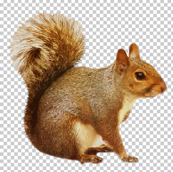 Squirrel png animal animals. Chipmunk clipart squirral