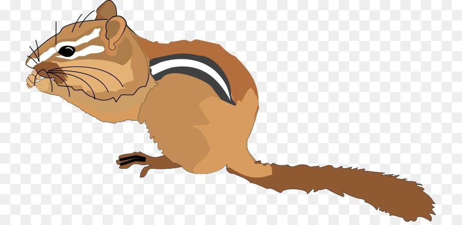 Chipmunk clipart squirral. Squirrel cartoon png download