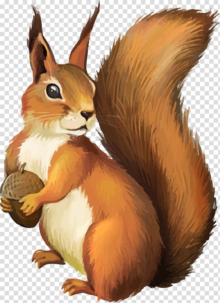 Transparent background png . Chipmunk clipart squirrel tail