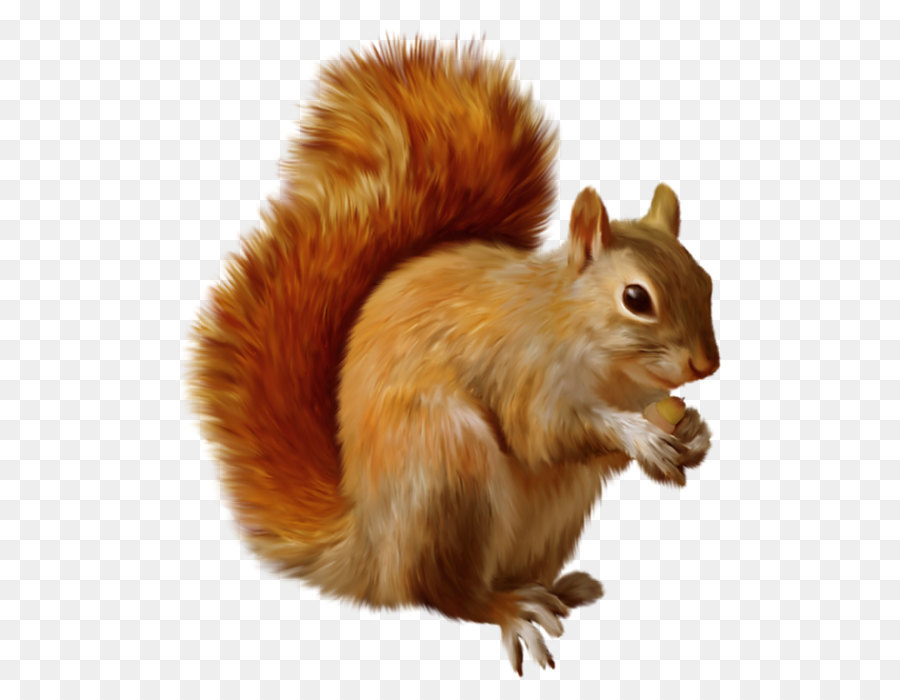 Chipmunk clipart squirrel tail. Cartoon png download free