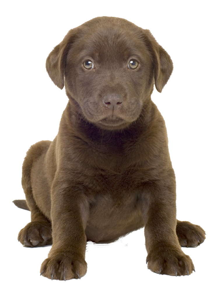 Dog best png free. Clipart puppy brown puppy
