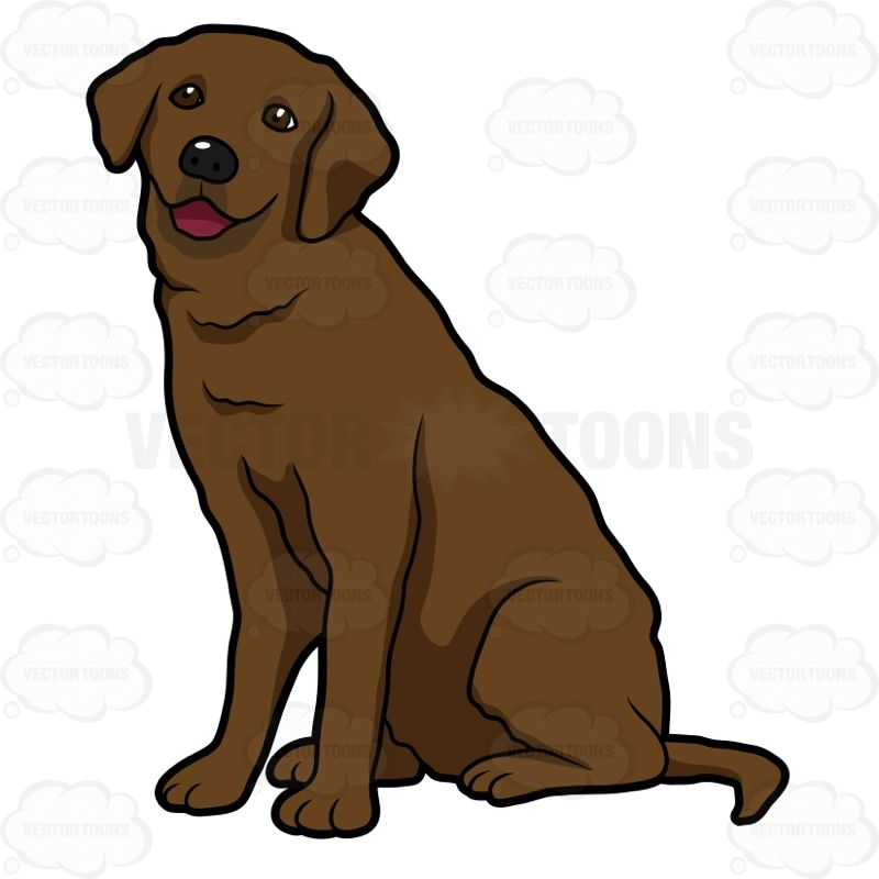 Happy looking labrador sitting. Clipart puppy chocolate lab