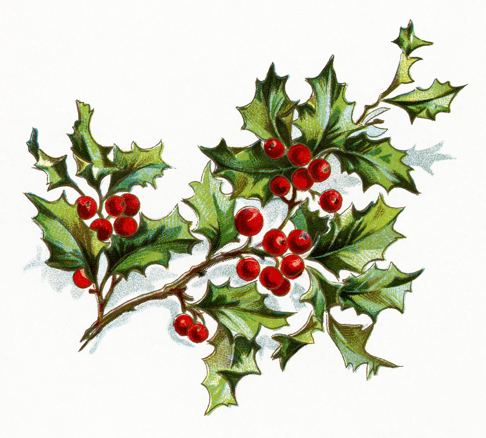 Free old fashioned christmas. Berry clipart holiday
