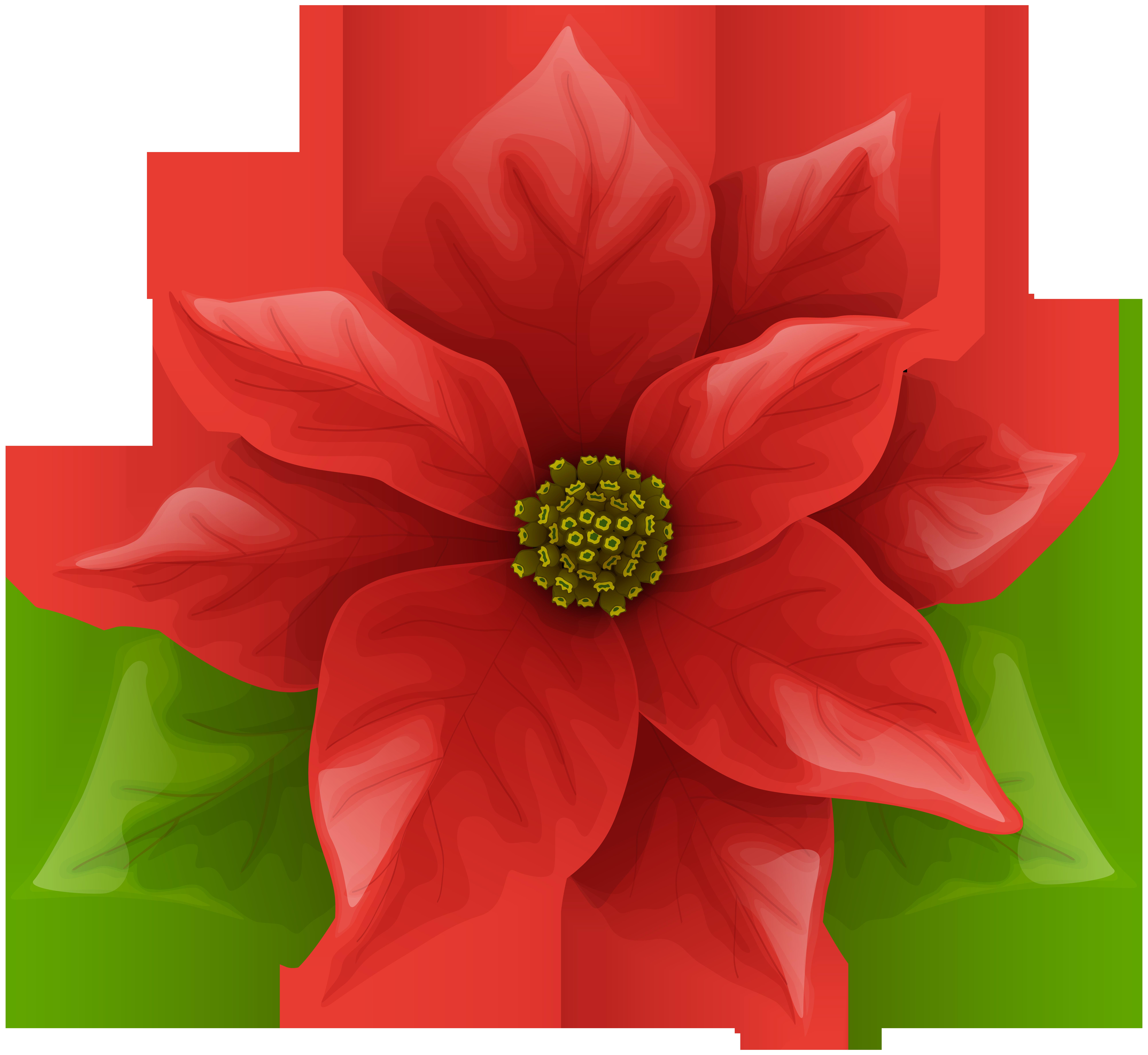 Christmas png clip art. Poinsettia clipart