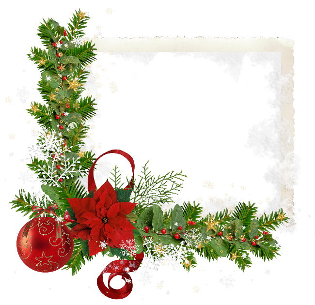 Forgetmenot flowers poinsettia frames. Christmas flower png