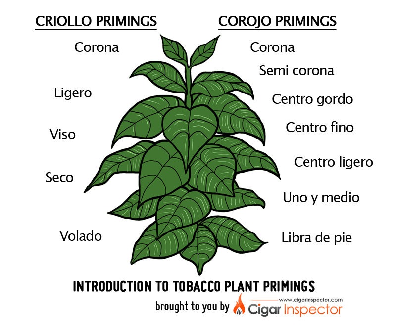 Introduction to tobacco primings. Dirt clipart small plant