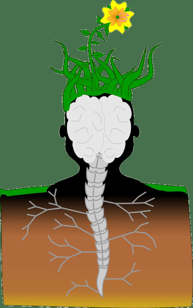 Heat clipart homeostasis. Cbd hemp oil health