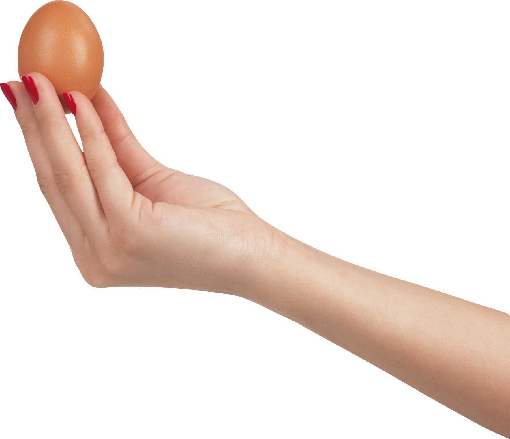 Holding egg isolated stock. Hand clipart arm