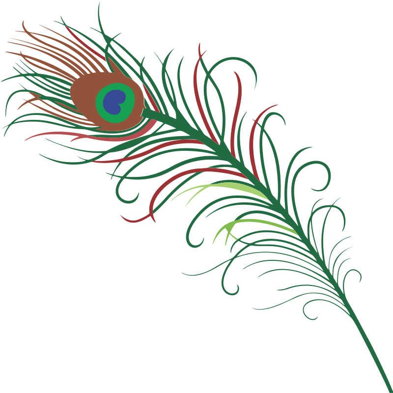 Peacock at getdrawings com. Circle clipart feather