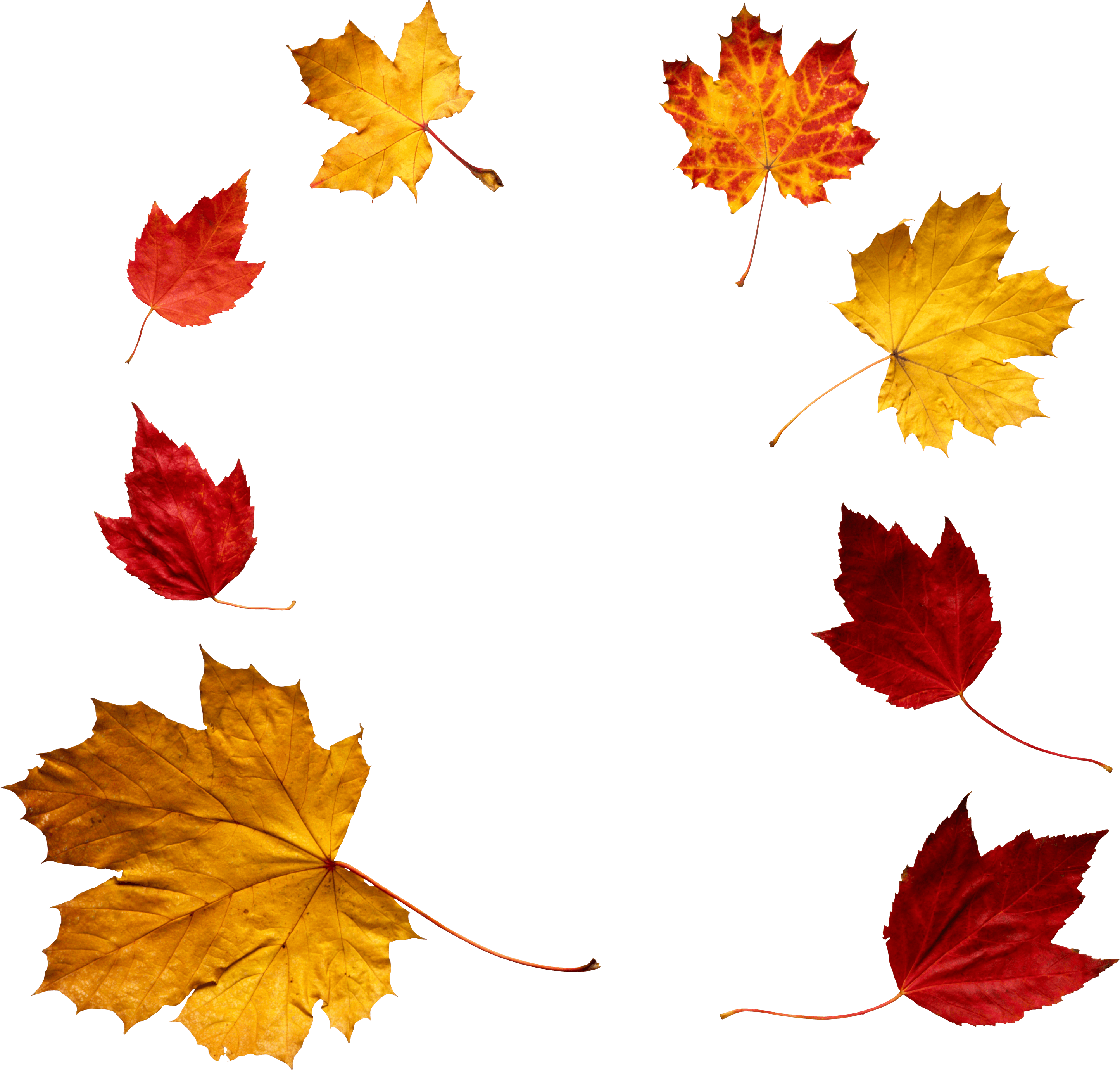 Autumn leaves transparent png. Circle clipart leaf