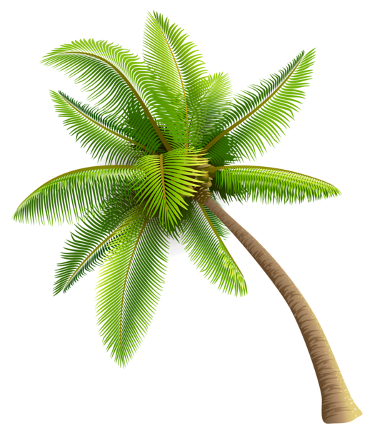 Green palm png planner. Clipart leaf coconut tree