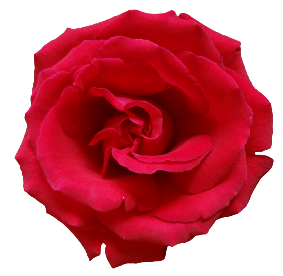 Circle clipart rose. Png flower images free