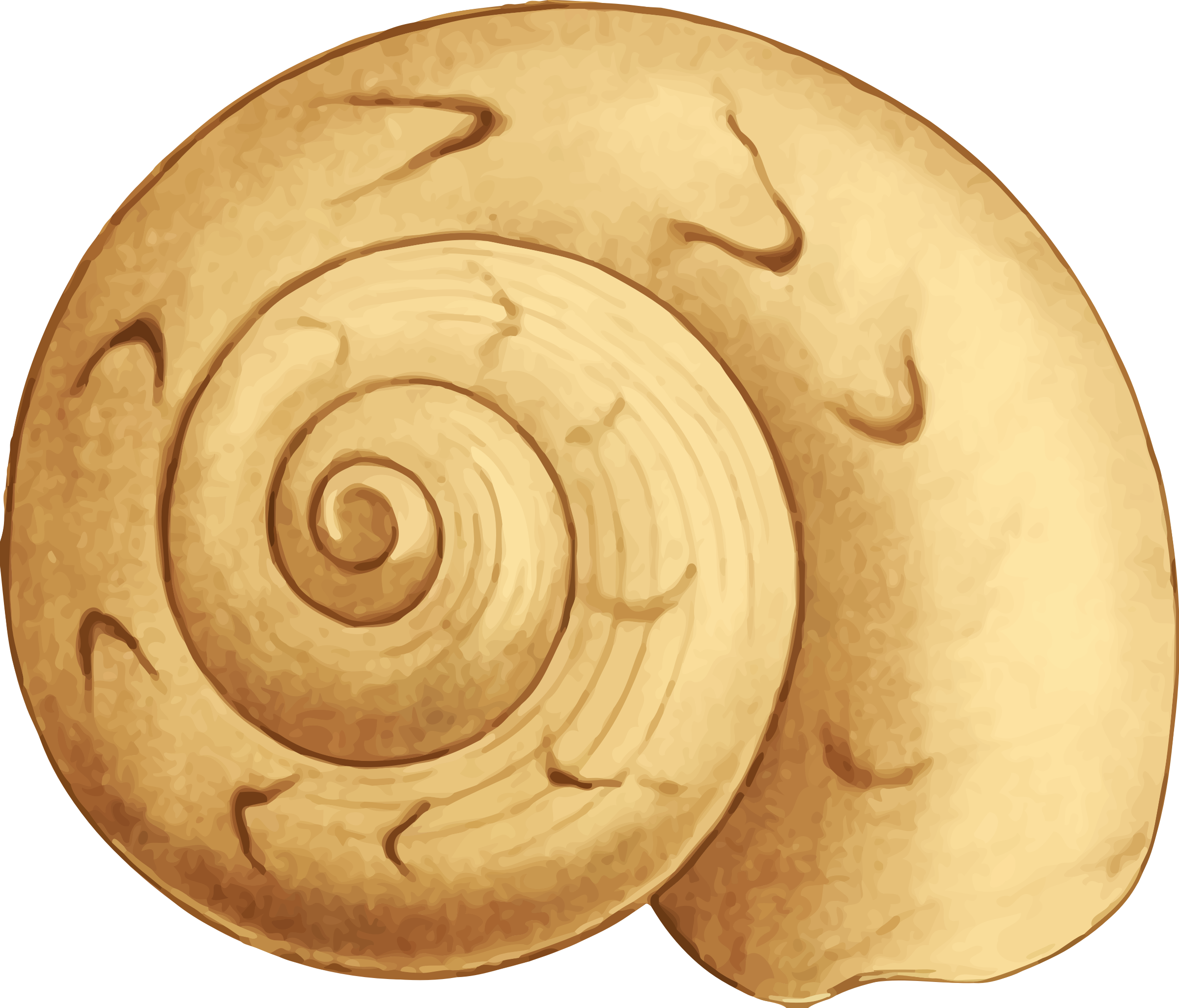Sea big image png. Shell clipart shell spiral