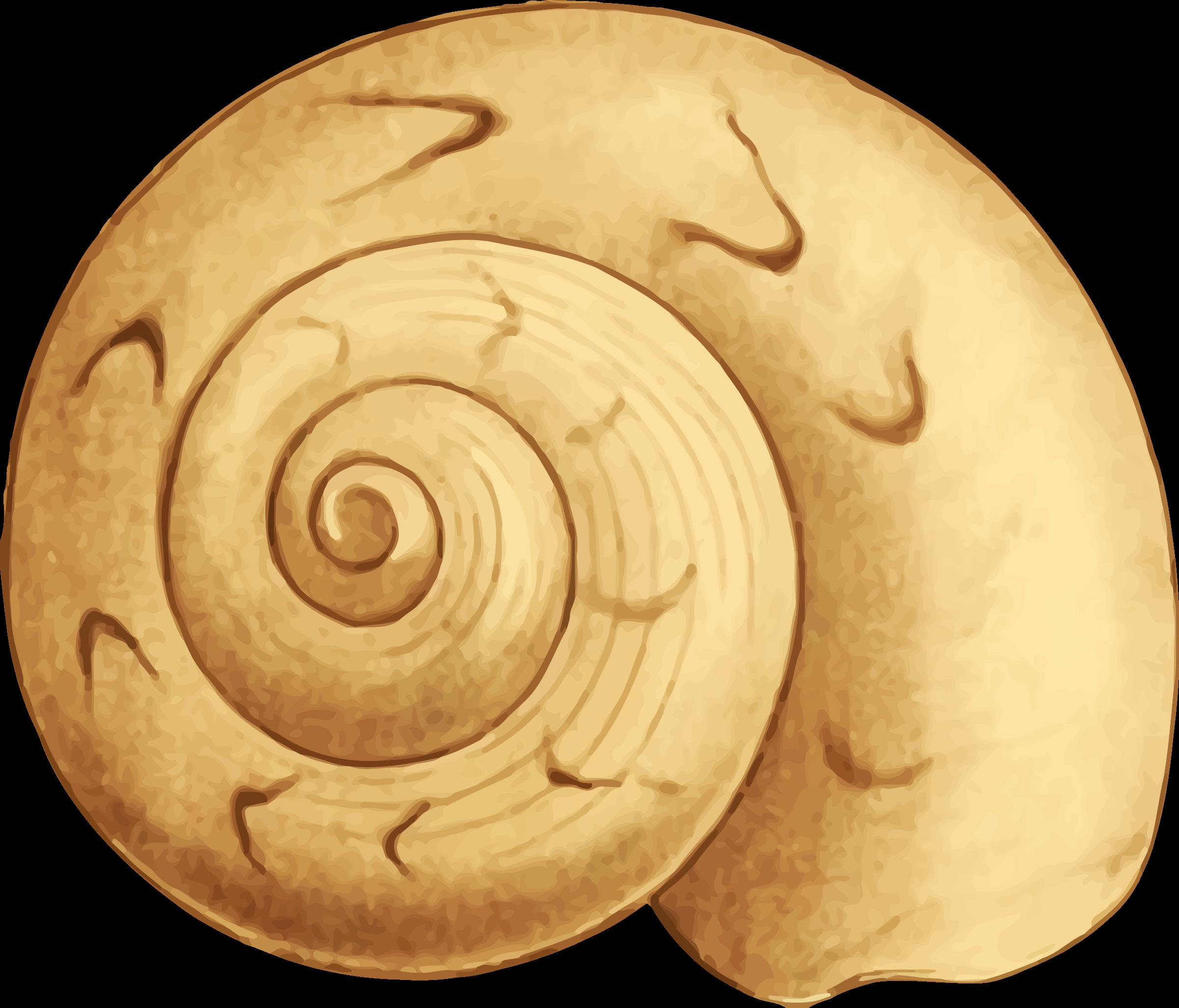 Sea shell big image. Clipart circle seashell