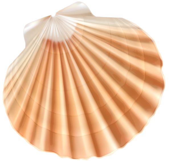 Seashells clipart beach item, Seashells beach item ...
