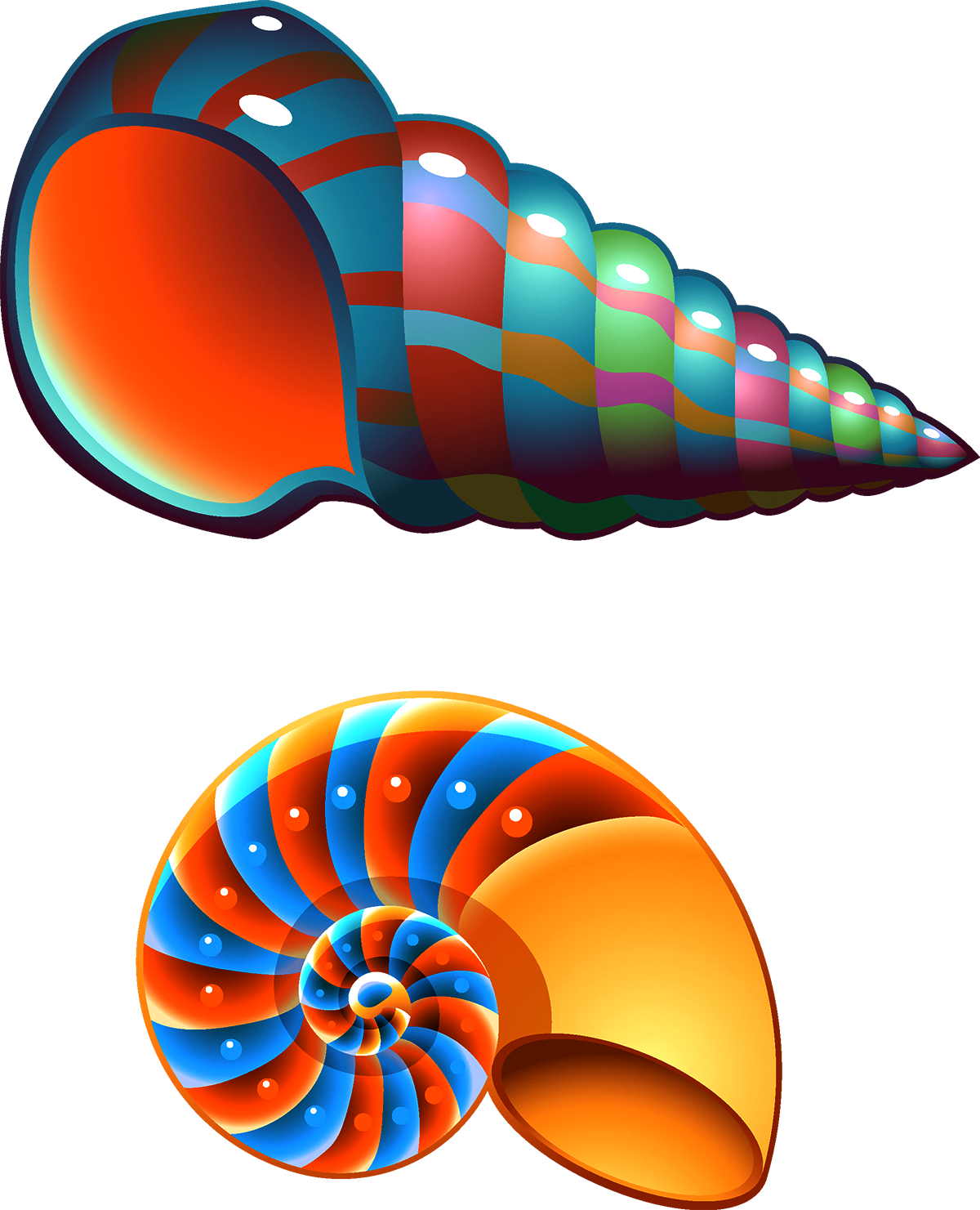 Shell clipart shell spiral. Seashell conch mollusc clip