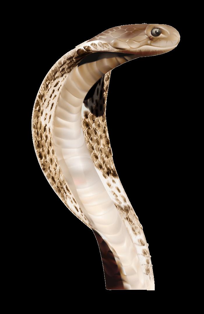 Transparent png stickpng cobra. Clipart circle snake