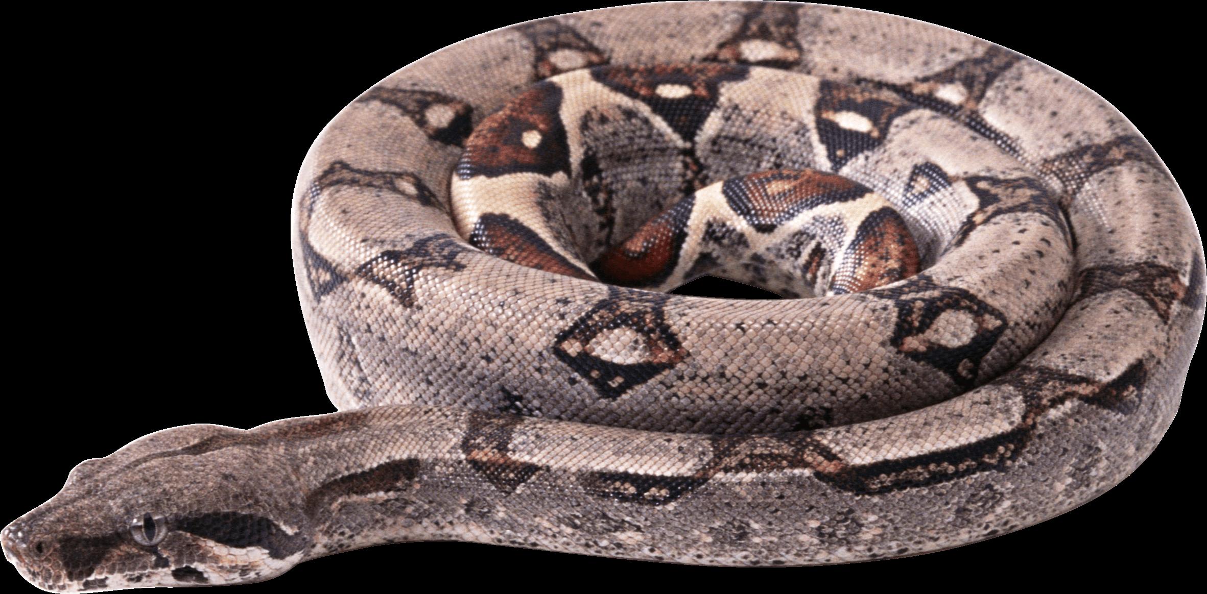 Clipart circle snake. Transparent png stickpng