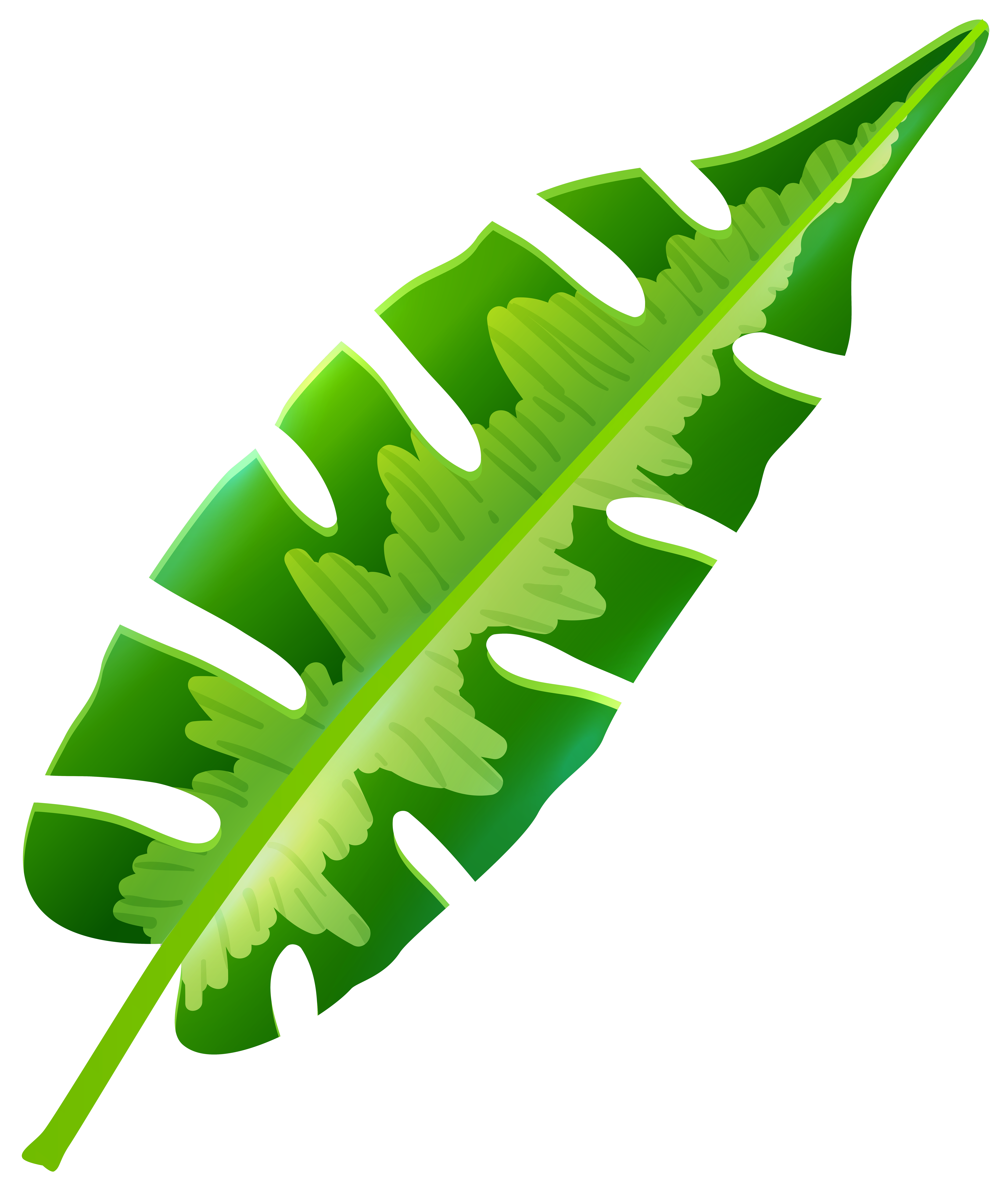 Leaf clipart leafy greens. Tropical clip art nights