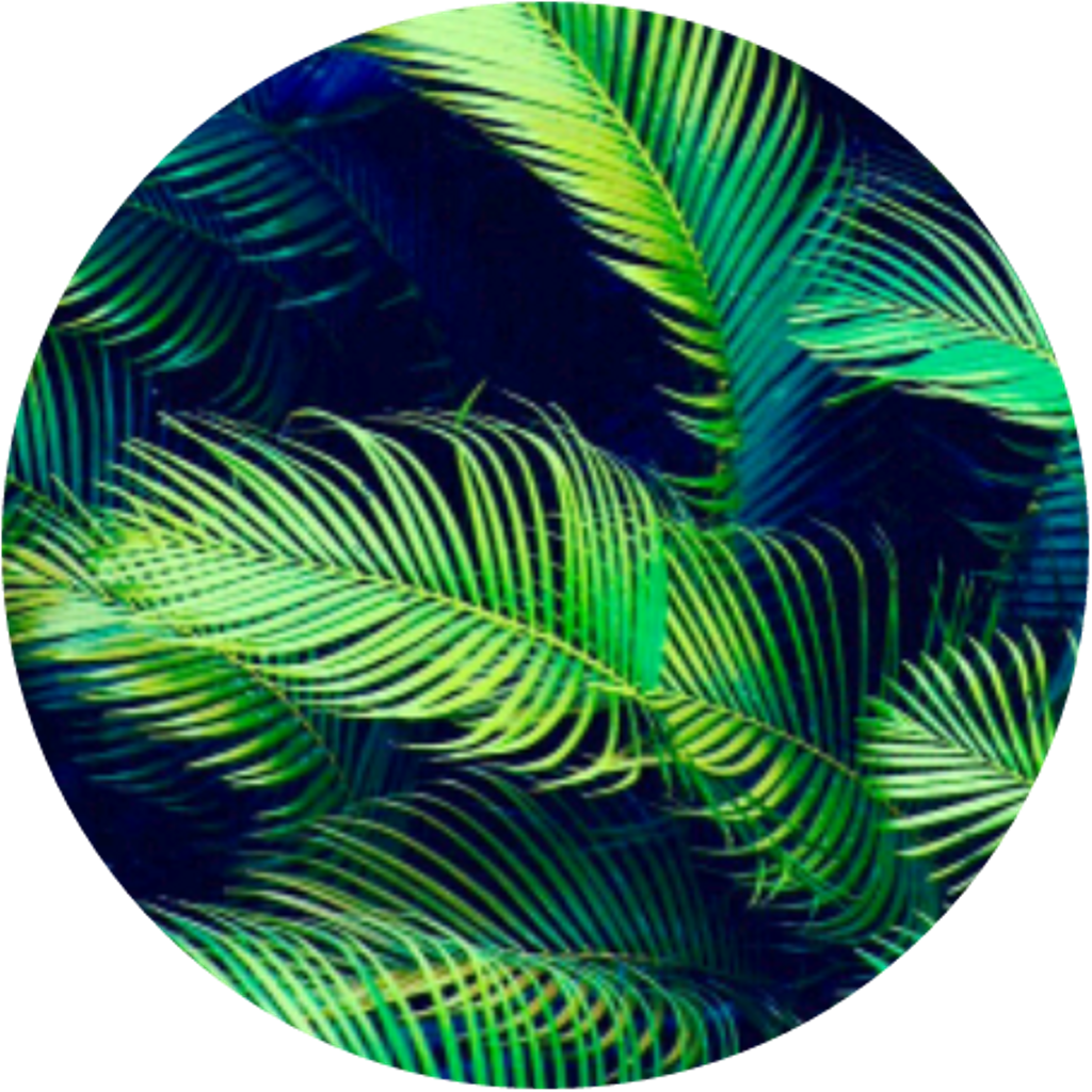 Circle clipart tropical. Leaves rainforest leavescircle forestci