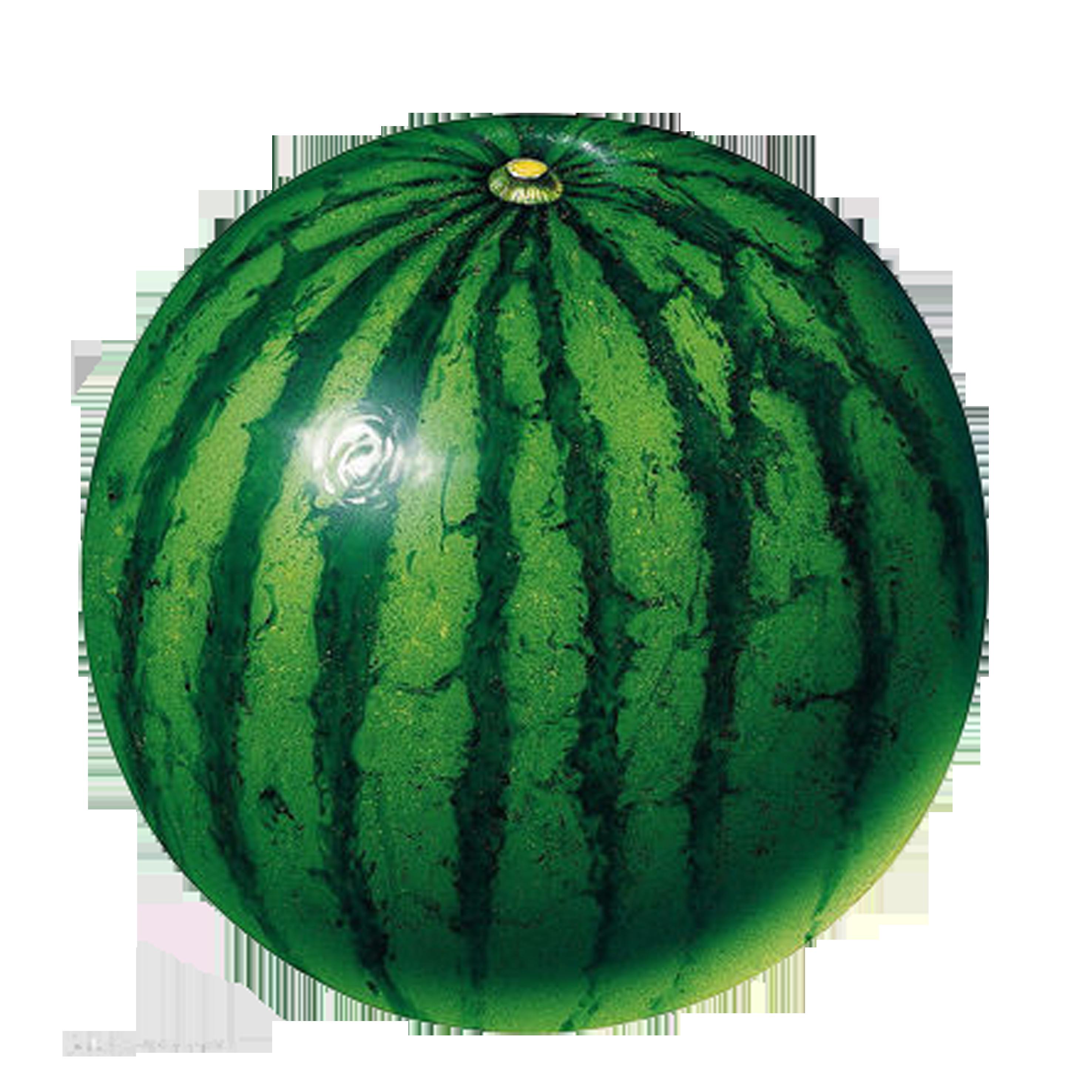 Lime clipart cucumber slice. Circle shape fruit clip