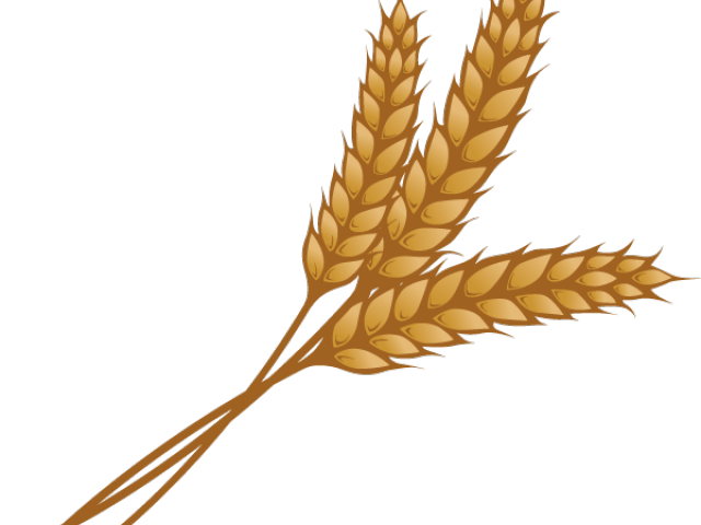 garland huge freebie. Wheat clipart palay