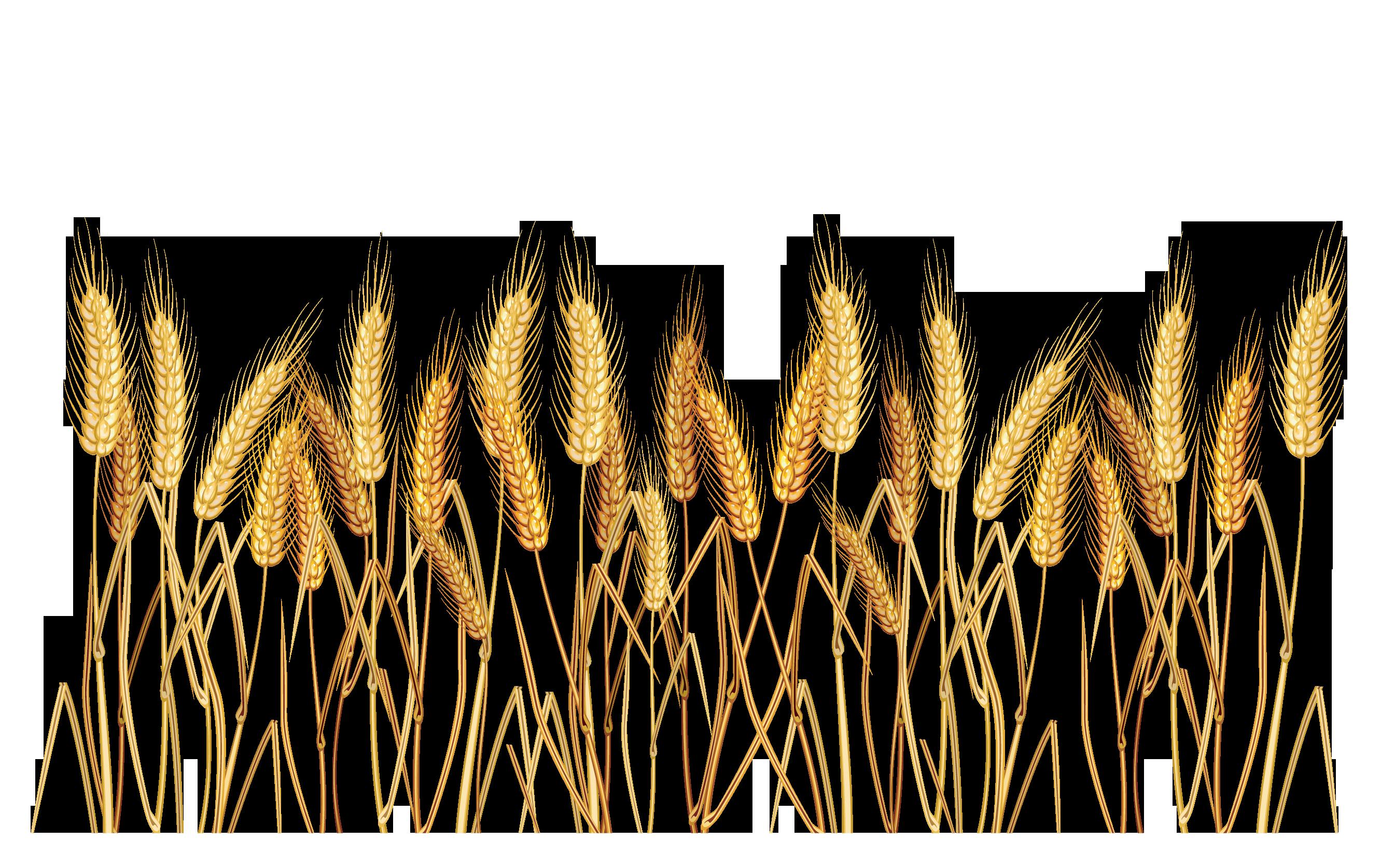 Clip art google search. Daisy clipart wheat grass