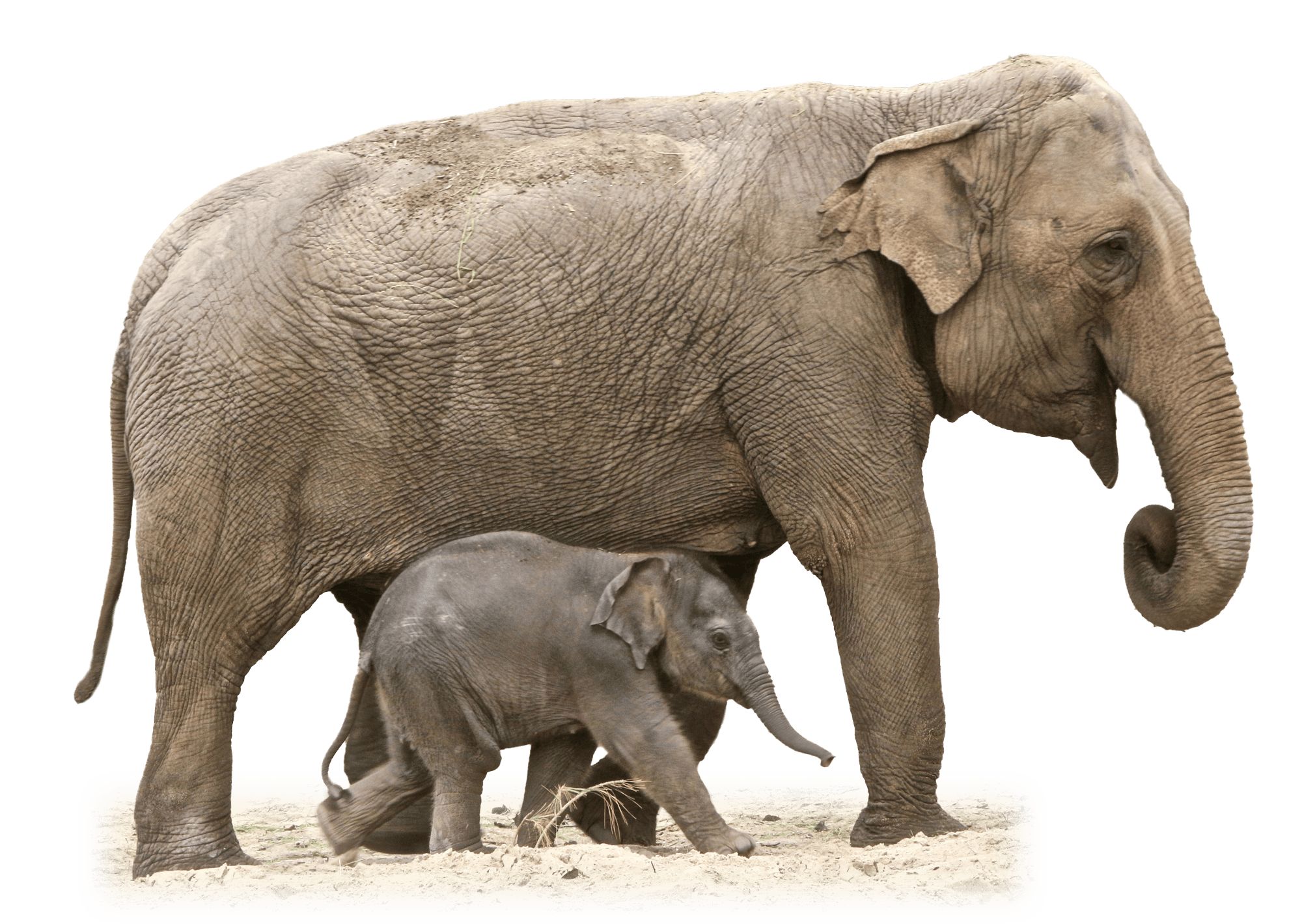 Clipart mom baby elephant. Victorian vintage circus transparent