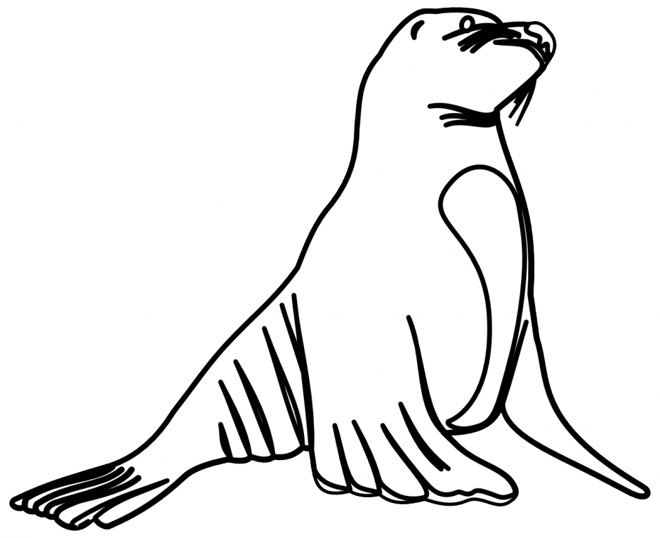 collection of sea. Seal clipart easy