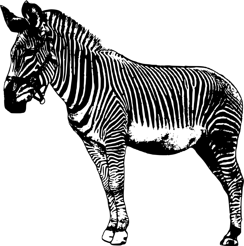 Clipart zebra pdf. Standing medium image png