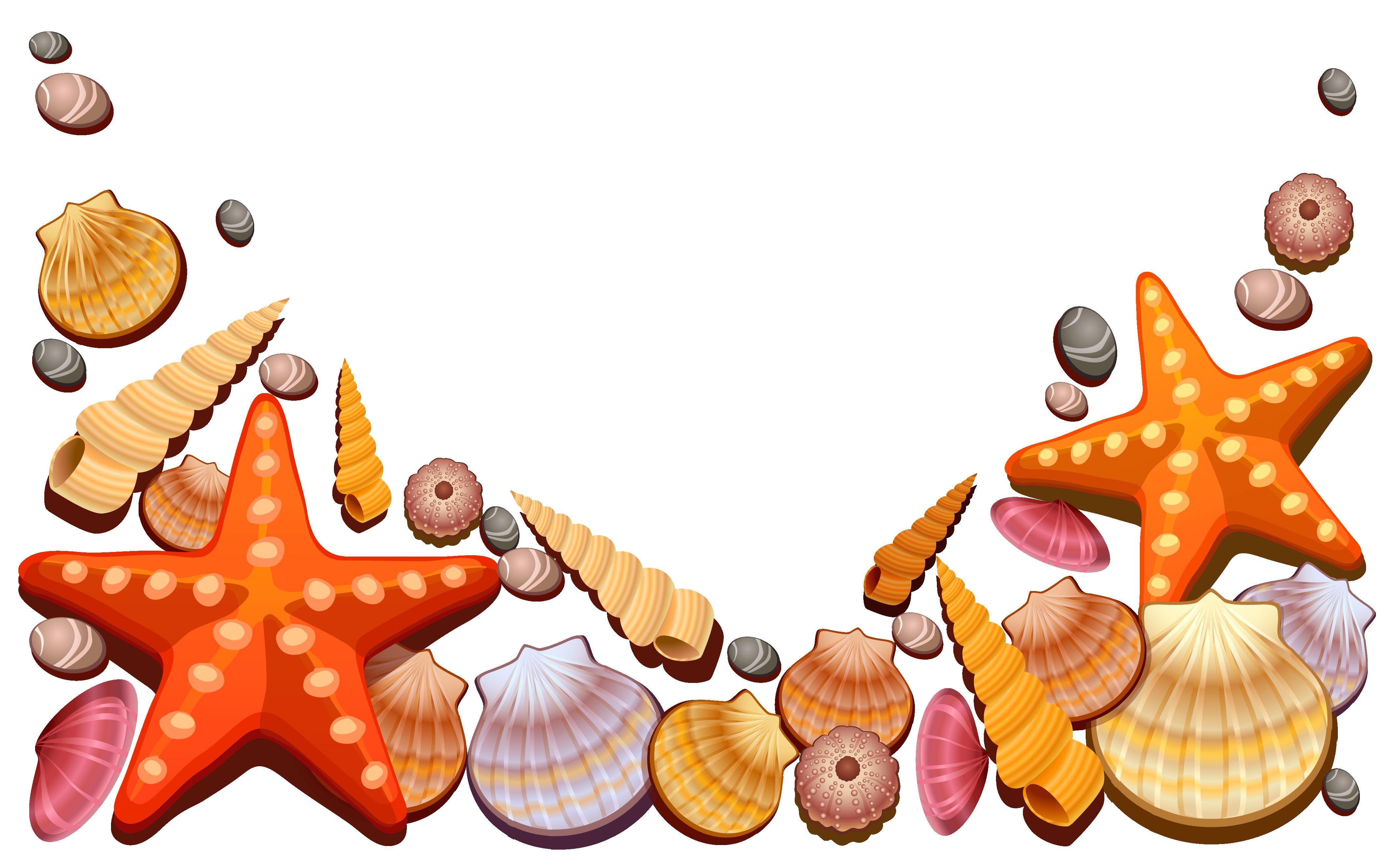 Greek clipart reef. Sea shells decor png