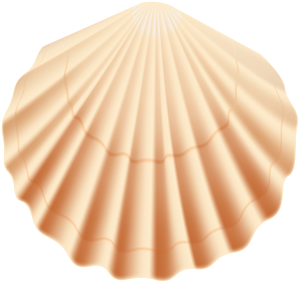 Seashell transparent png clip. Shell clipart shell scallop