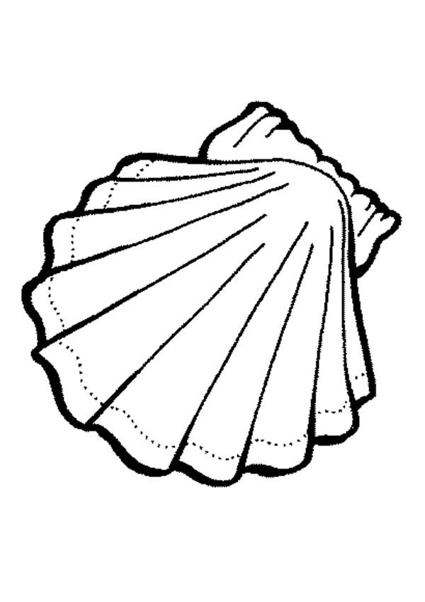 Clam clipart coloring page. Sea animals lovely shell