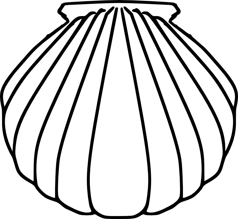 collection of shell. Clam clipart coloring page