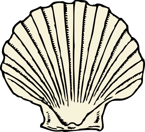 Clam clipart coloring page. Shell drawing at getdrawings