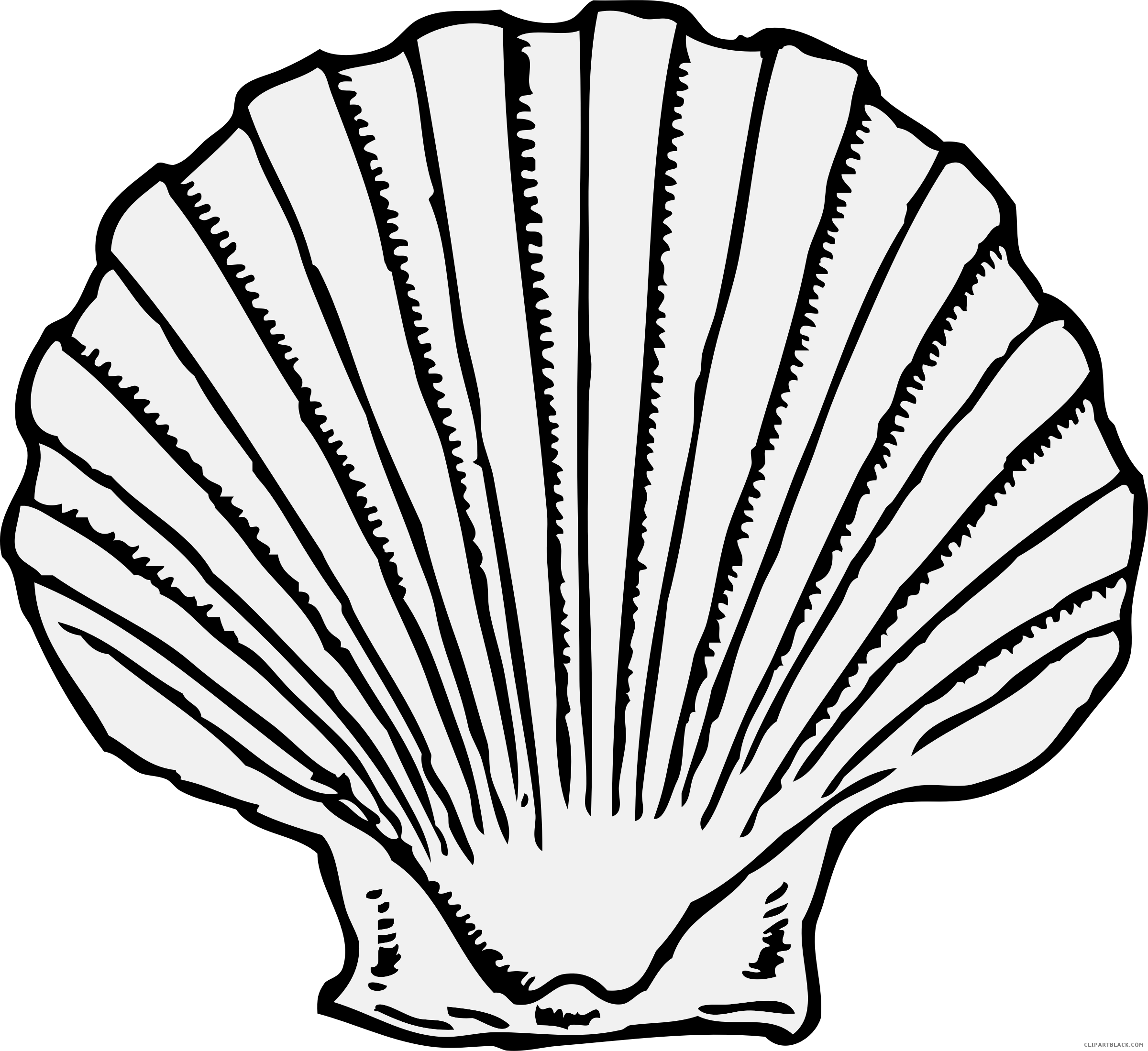 Jellyfish clipart animal shell. Scallop free black white