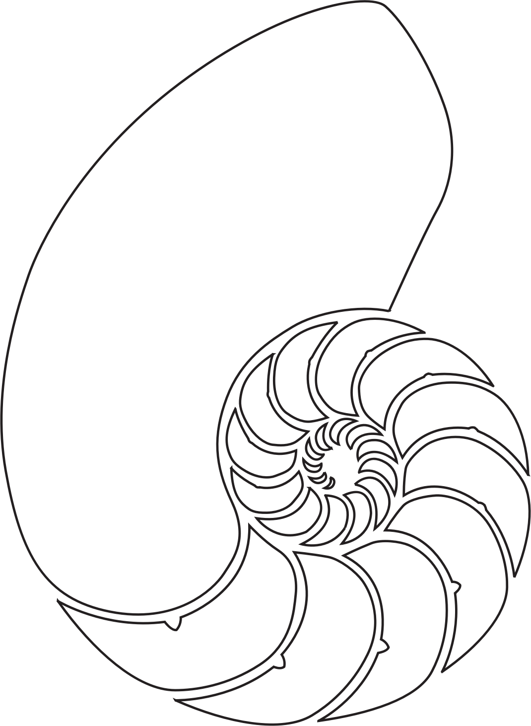 Clam clipart kerang. Shotgun shell drawing at
