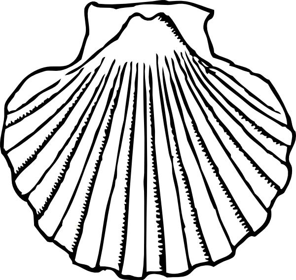 Shell clipart drawing.  collection of oyster