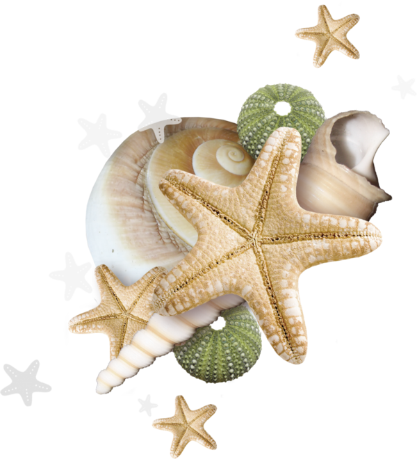 Shell clipart starfish wedding. Beach pinterest ephemera and