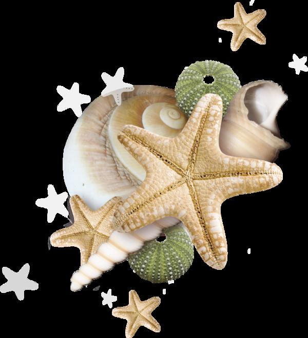 Beach pinterest ephemera and. Nautical clipart starfish
