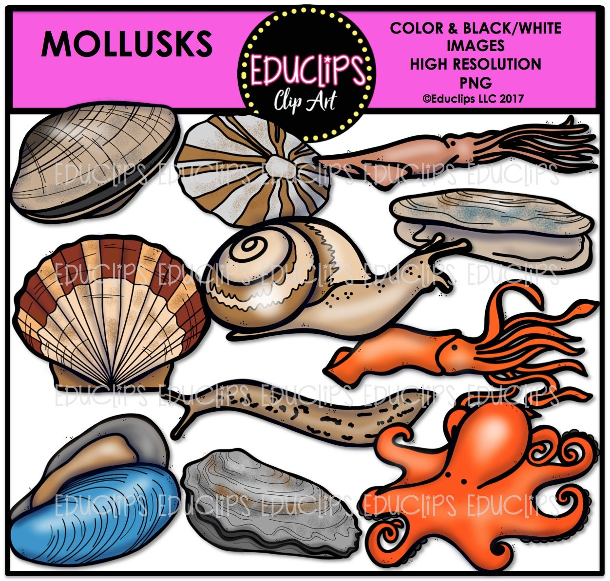 Clam clipart limpet. Mollusks clip art bundle
